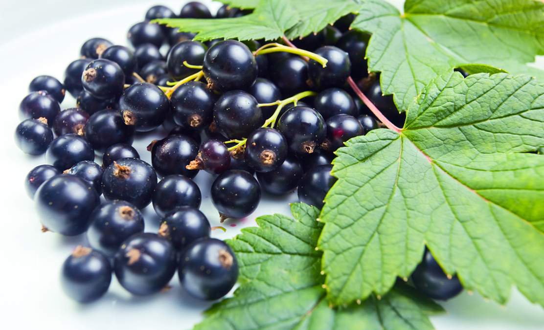 Common Berries Heal High Blood Pressure and Diabetes