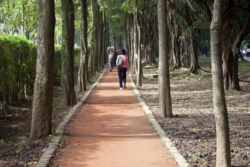 """Forest Bathing"" Cures High Blood Pressure and Other Diseases"