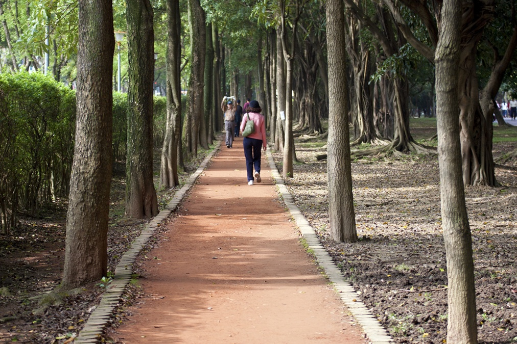 """""""Forest Bathing"""" Cures High Blood Pressure and Other Diseases"""