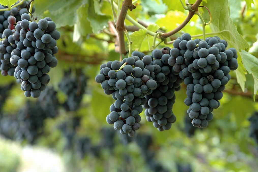 Yummy Fruit Heals Genetic High Blood Pressure