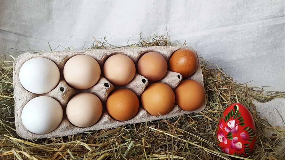 Cholesterol and Eggs (mythbuster)