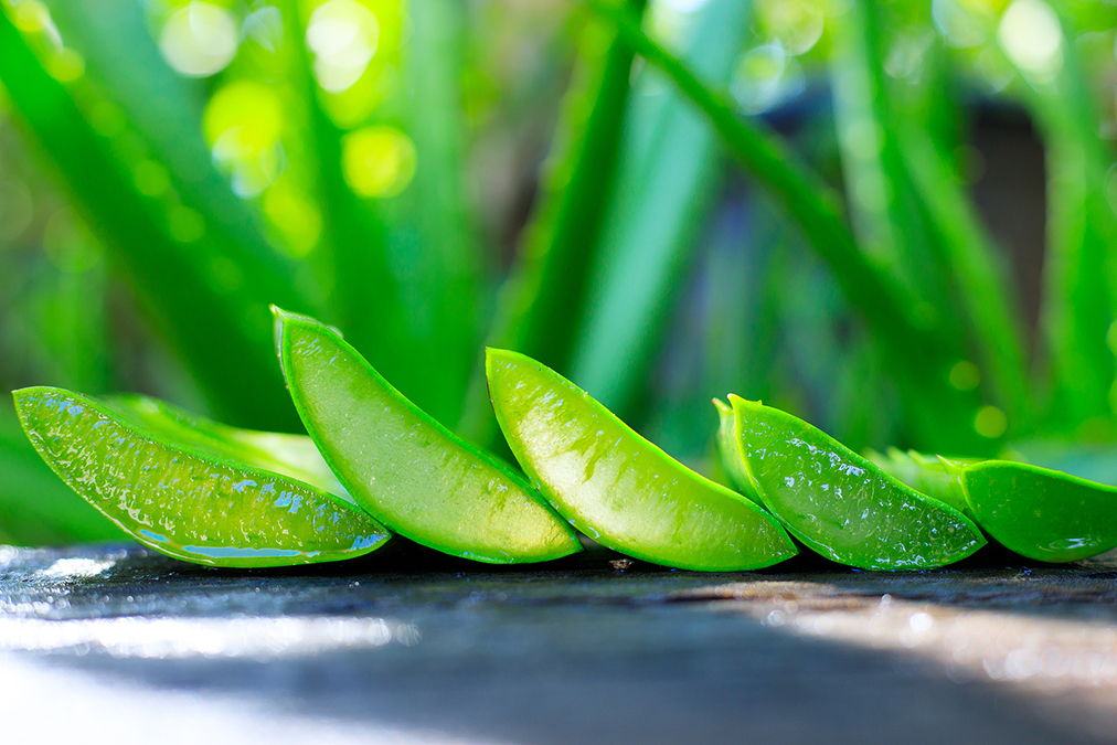 Does Aloe Vera Help For Hemorrhoids? (Surprise!)