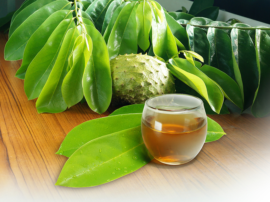 The Leaves That Heal Hemorrhoids